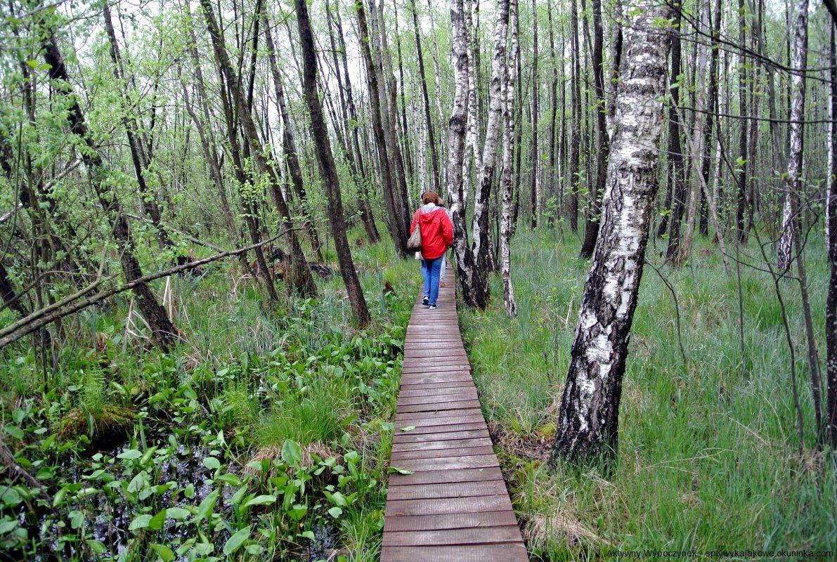 Wycieczka krajoznawcza po Polesiu - ścieżka po bagnach w Poleskim Parku Narodowym